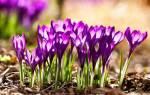 Поздравляю с первым днем весны. Поздравления с первым днем весны. Поздравления с весной