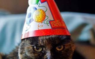Кошки поздравляют с днем рождения. Как поздравить с днем рождения кошку