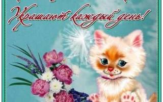 Хорошего тебе настроения и приятного дня. Пожелания любимой девушке хорошего дня