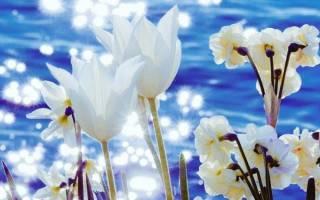 Поздравления с добрым днем. Красивые пожелания доброго утра и хорошего дня
